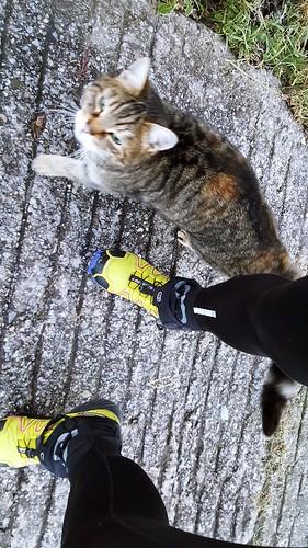 kitten above Oberdorf