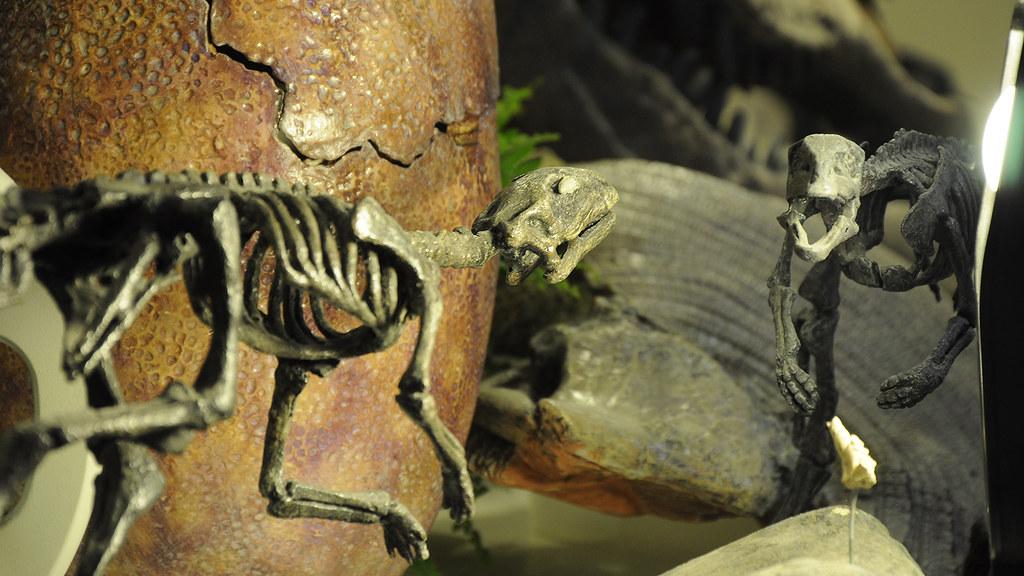 Laboratorio de Paleoartistas