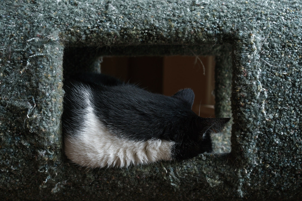 Our cat Boo can be seen sleeping in the cat tree through openings in the side