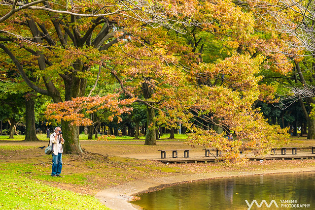代代木之秋 Yoyogi Autumn / Tokyo, Japan, Panasonic DMC-GX7, Lumix G X Vario 35-100mm F2.8 Power OIS