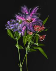 lilies-three-lab