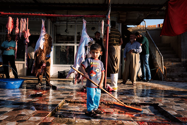 Angry bird, a young butcher in Kurdistan