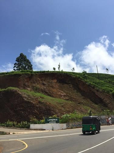 この辺はヌワラエリアといって地味に標高2000m手前の茶の名産地