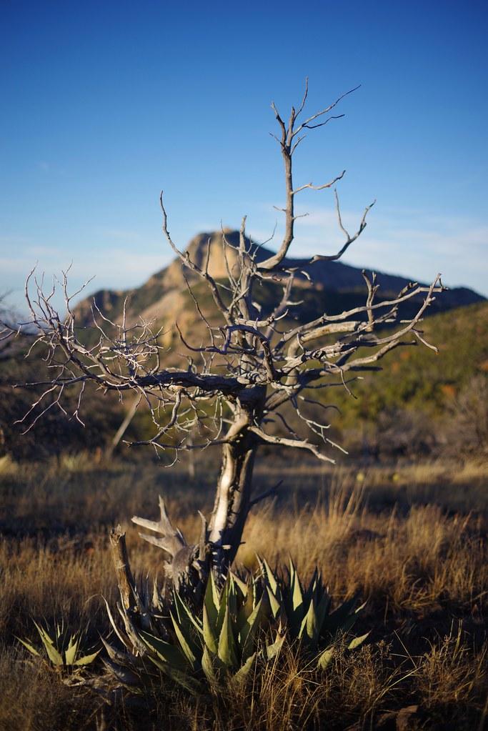 Big Bend National Park Photo Visit Big Bend Guides For