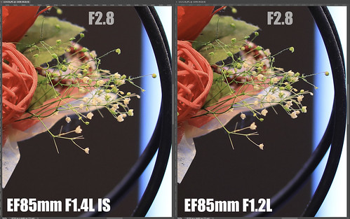 EF85mm F1.4L IS vs EF85mm F1.2L_14