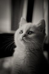 Look of  cat