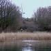20180101 Wlk frm Tibshelf_0004 Heron~Tibshelf Fishing Ponds