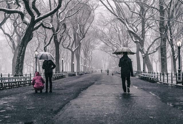 Central Park Snow 5 A