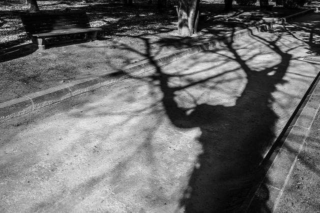 Shadow of the Life いのちの影