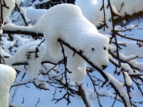 Polar bear sculpture created by snow accumulated on a branch.