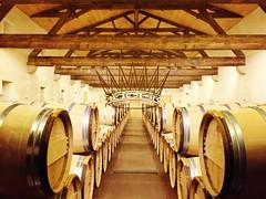 Bordeaux Fine Wine Tour @ 1 December 2017 - Château d'Yquem - Photo of Landiras