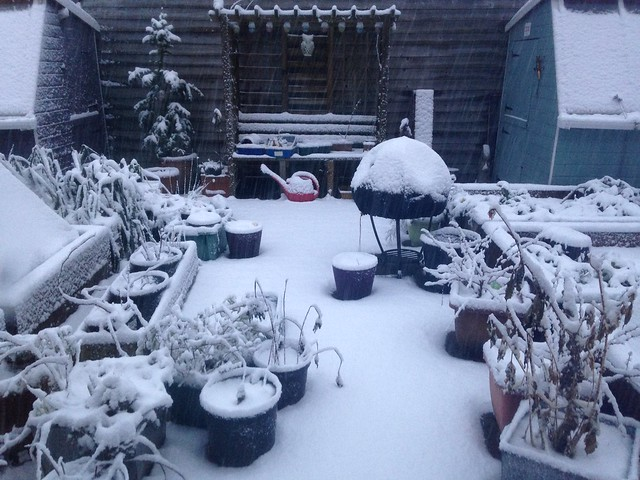 Snowy garden, new garden plan
