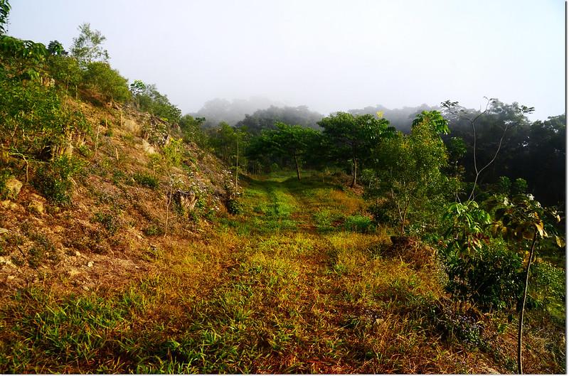 南真我山山頂造林區 1