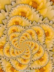 Flower_02