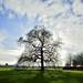 Bare Tree and Blue sky