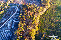 Fall Foliage_rural Georgia_DJI_0706