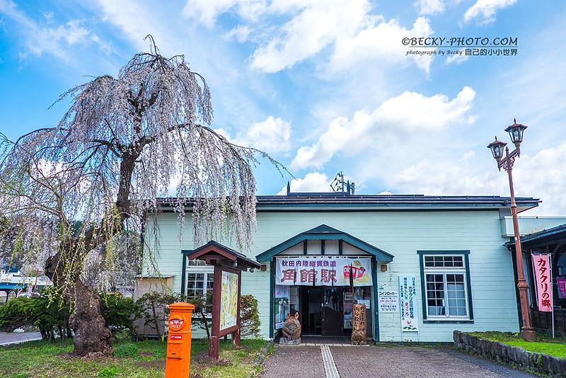 2017.Apr Kakunodate, Akita 秋田角館櫻かくのだて