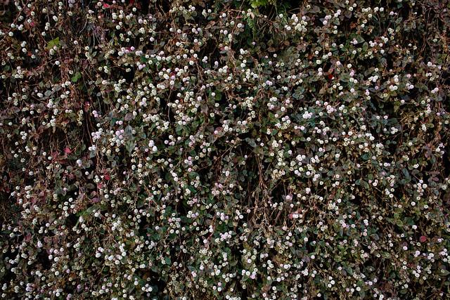花々: SIGMA DP1x