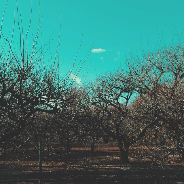 Medium-sized trees