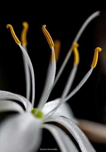 dancing delicate flower