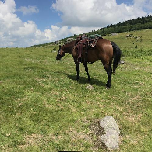 mountains view scenic inspiring panoramic trailride grazing horse horseback