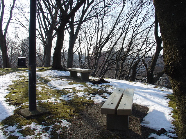 Moss, snow, and benches