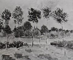 Les Peupliers dans un pré, temps gris  (C Pissarro - PDRS 1467)