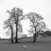 'Sheep may safely graze ...' - Take II