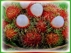 Sweet and fleshy fruits of Nephelium lappaceum (Rambutan, Hairy Lychee) waiting to be enjoyed, 11 Dec 2017