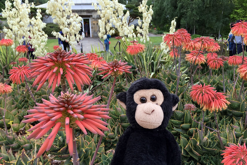 Succulents and Monkey
