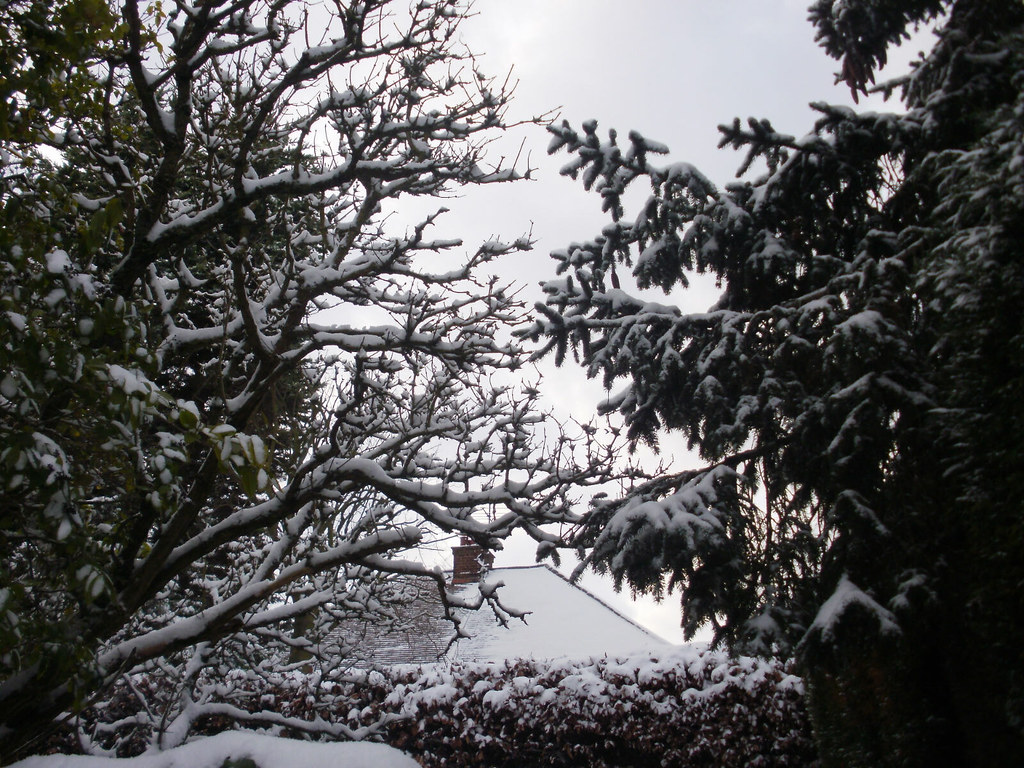 Snow branches 2010