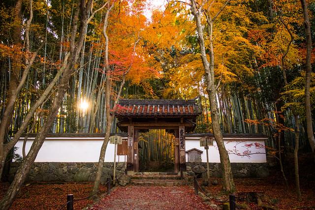 momiji '17 - autumn foliage #6 (Jizo-in temple, Kyoto)