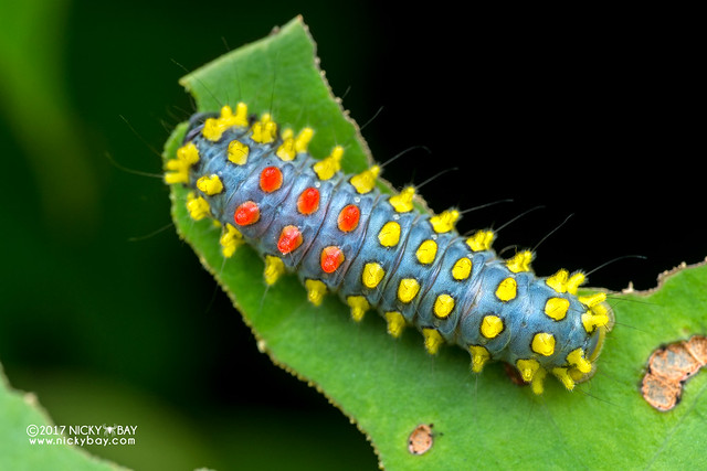 Caterpillar - DSC_2140