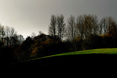 late autumn at dawsholm