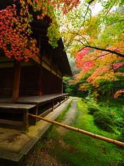 京都西芳寺 Kyoto  Saihoji