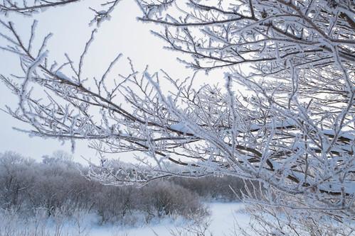 Snow Flower In Hokkaido