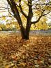 Autumn Sunlight by david.hogan7
