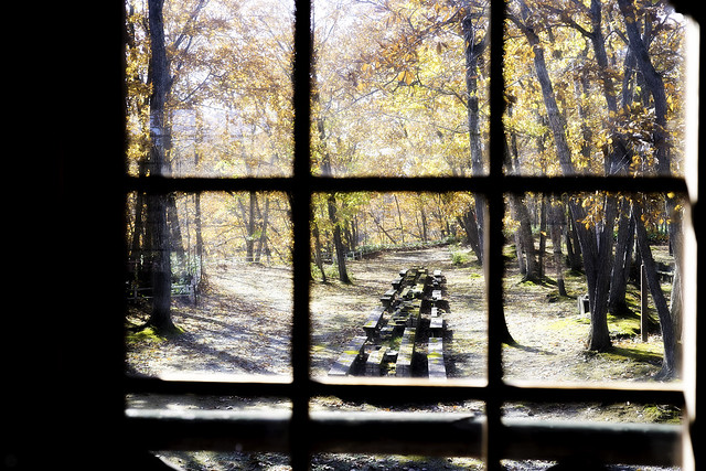 Afterimage of autumn