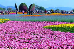 其他花卉及植物 2017c