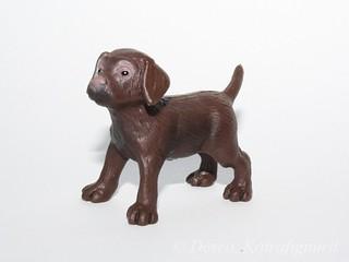 Labradorinnoutaja, ruskea_wm