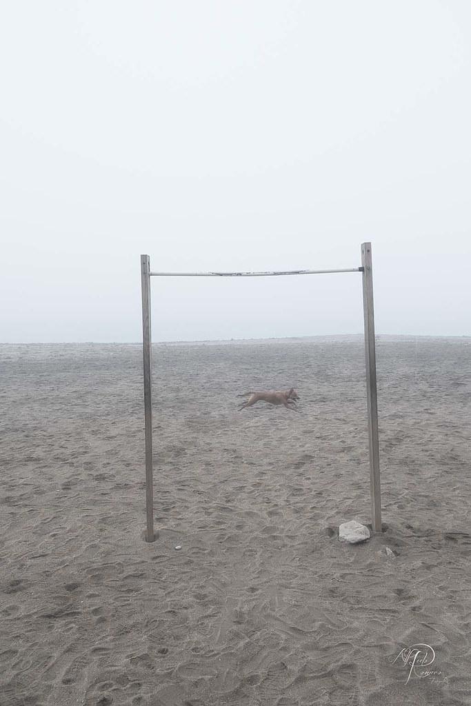 perro y niebla