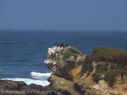 Sea birds roost near Glass Beach, California