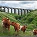Arten Gill Viaduct by Welsh Gold