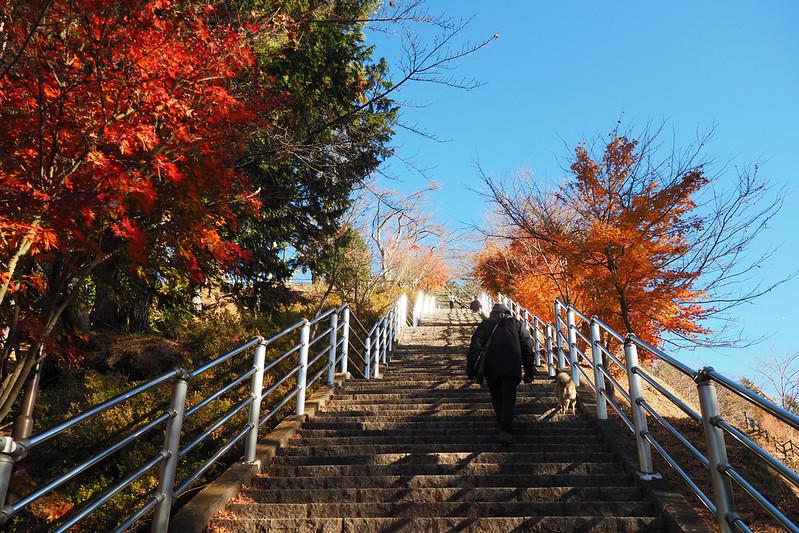新倉山淺間公園|山梨縣