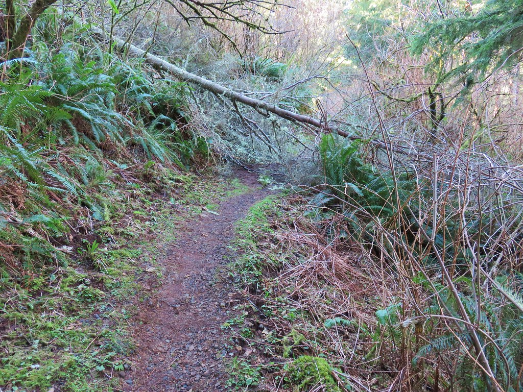 Trail at Cape Meares
