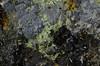 Photo:セリウムピータース石 / Petersite-(Ce) By dnh_macro