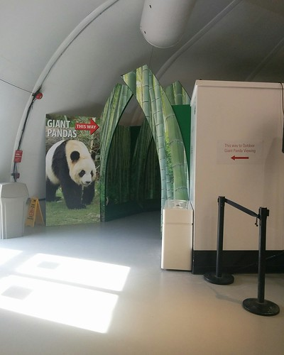 """Giant Pandas this way"" #toronto #torontozoo #pandas #giantpandaexperience #gate #latergram"