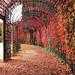 Herbstimpressionen by VenusTraum