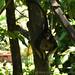 <p><a href=&quot;http://www.flickr.com/people/140820502@N08/&quot;>exploreslk</a> posted a photo:</p>&#xA;&#xA;<p><a href=&quot;http://www.flickr.com/photos/140820502@N08/38119487635/&quot; title=&quot;Crazy monkey&quot;><img src=&quot;http://farm5.staticflickr.com/4594/38119487635_9ec5fce06f_m.jpg&quot; width=&quot;240&quot; height=&quot;160&quot; alt=&quot;Crazy monkey&quot; /></a></p>&#xA;&#xA;<p>Click to read more on <a href=&quot;http://exploreslk.com/dehiwala-zoo/&quot; rel=&quot;nofollow&quot;>Dehiwala Zoo</a>. <br />&#xA;<br />&#xA;Feel free to use this image, but give credits to <a href=&quot;http://exploreslk.com/&quot; rel=&quot;nofollow&quot;>exploreslk.com</a>.</p>