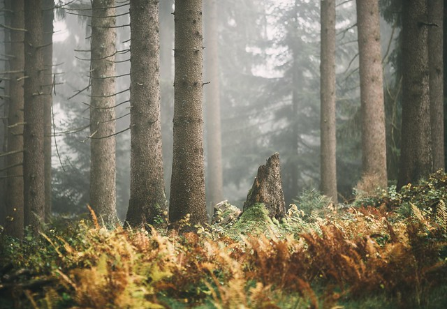 Into the deep forest